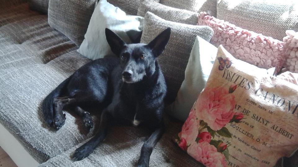 Hund der Pfotennanny Nina